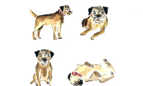border terrier illustration | 9×12 watercolor